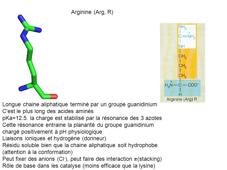 Arginine (Arg, R) Longue chaine aliphatique terminé par un groupe guanidinium C'est le plus long des acides aminés pKa=12.5. la charge est stabilisé p