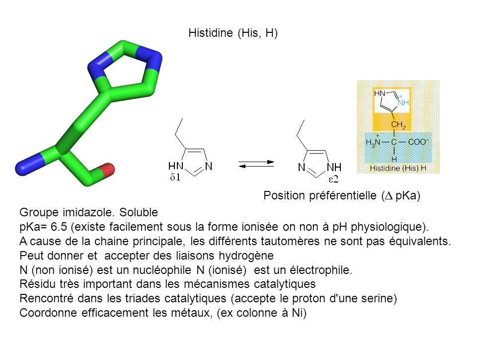 Histidine (His, H) Position préférentielle ( pKa) Groupe imidazole. Soluble pKa= 6.5 (existe facilement sous la forme ionisée on non à pH physiologiqu