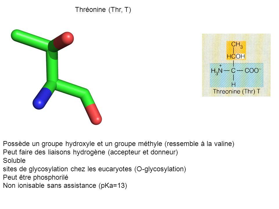 Possède un groupe hydroxyle et un groupe méthyle (ressemble à la valine) Peut faire des liaisons hydrogène (accepteur et donneur) Soluble sites de gly