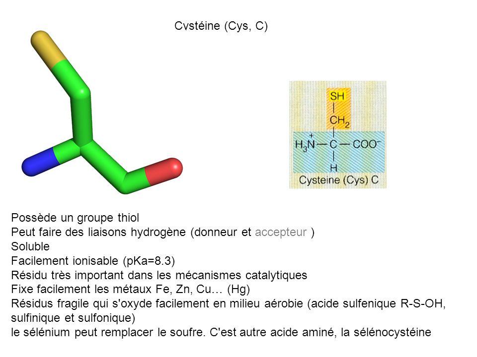Cystéine (Cys, C) Possède un groupe thiol Peut faire des liaisons hydrogène (donneur et accepteur ) Soluble Facilement ionisable (pKa=8.3) Résidu très