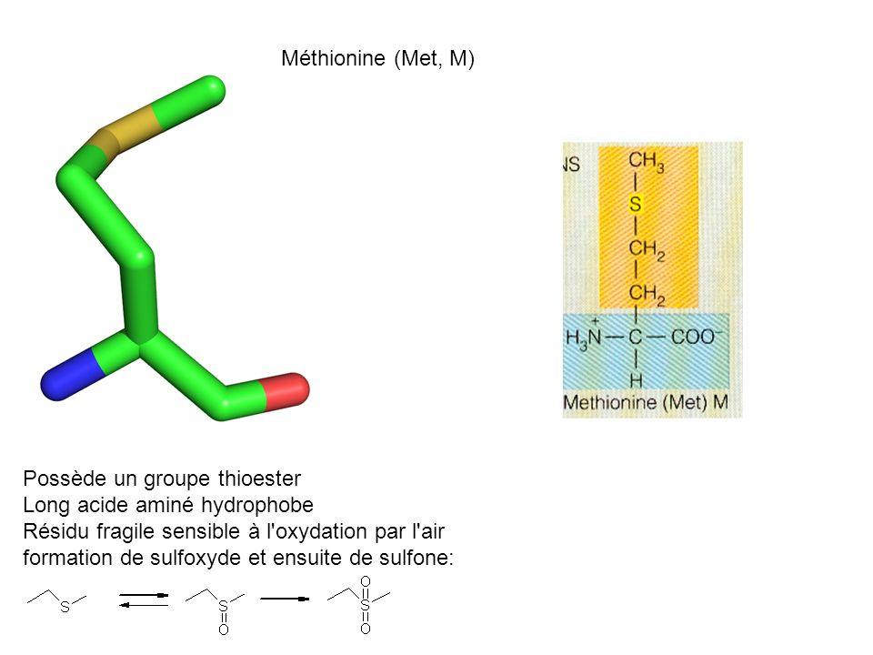 Méthionine (Met, M) Possède un groupe thioester Long acide aminé hydrophobe Résidu fragile sensible à l'oxydation par l'air formation de sulfoxyde et