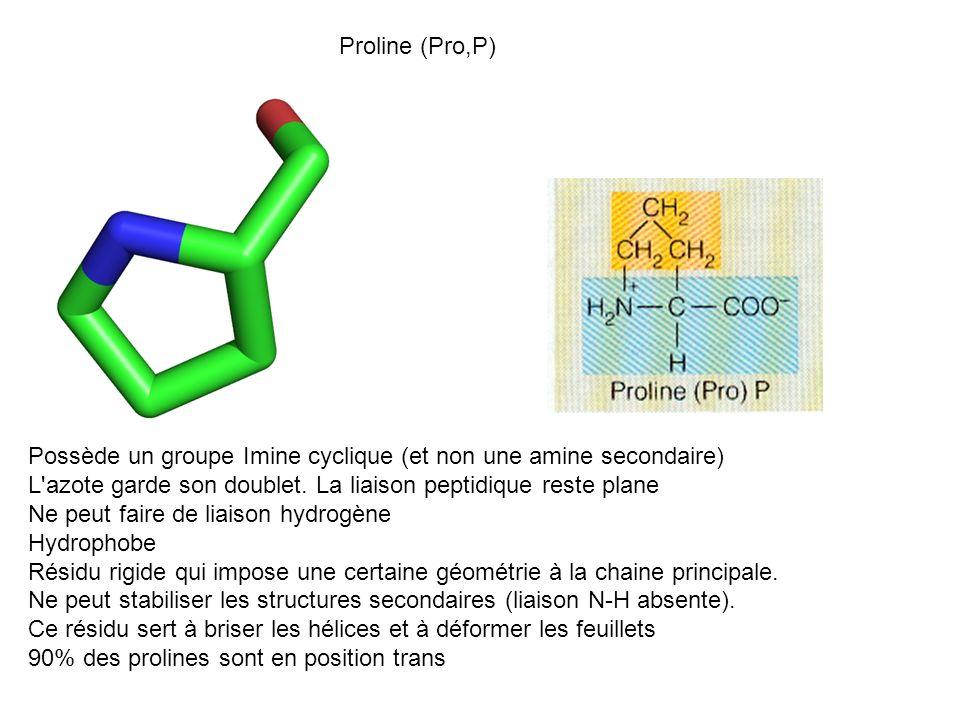 Proline (Pro,P) Possède un groupe Imine cyclique (et non une amine secondaire) L'azote garde son doublet. La liaison peptidique reste plane Ne peut fa