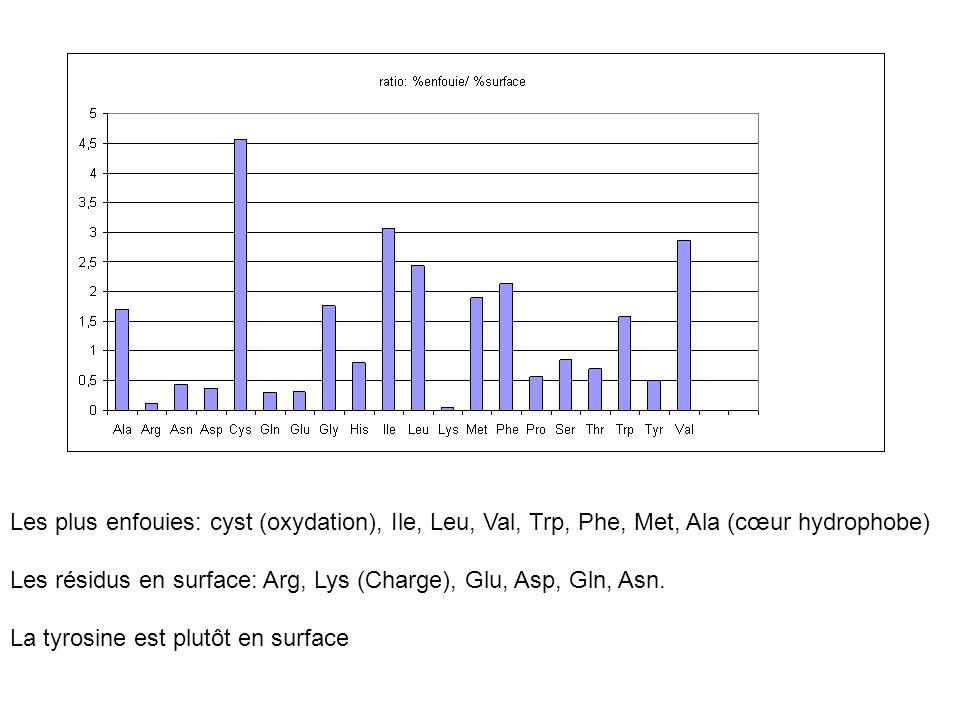Les plus enfouies: cyst (oxydation), Ile, Leu, Val, Trp, Phe, Met, Ala (cœur hydrophobe) Les résidus en surface: Arg, Lys (Charge), Glu, Asp, Gln, Asn