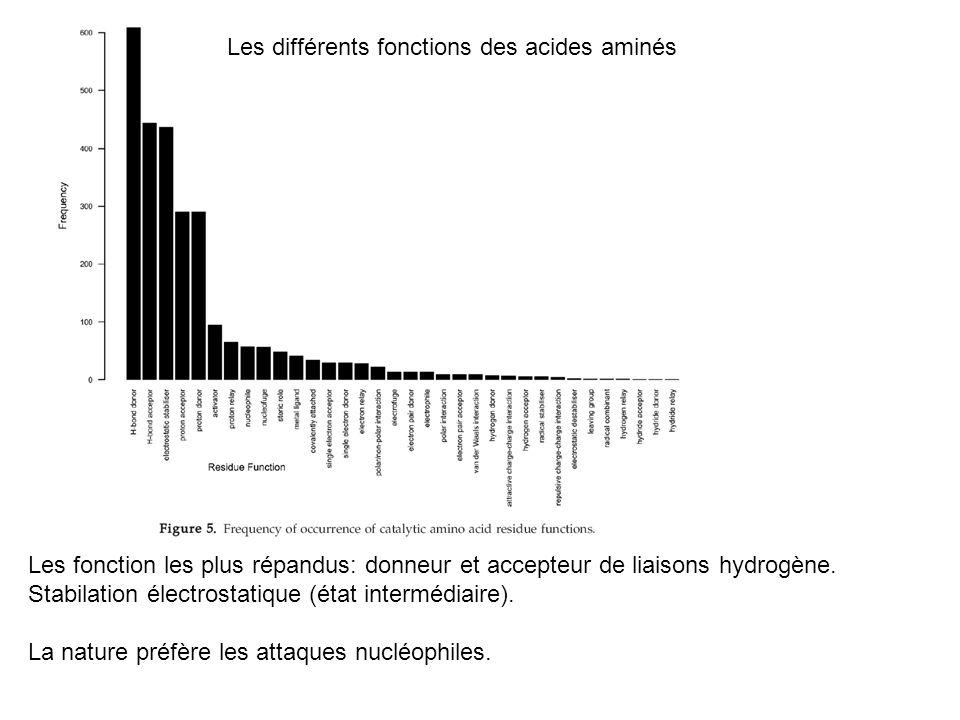 Les différents fonctions des acides aminés Les fonction les plus répandus: donneur et accepteur de liaisons hydrogène. Stabilation électrostatique (ét