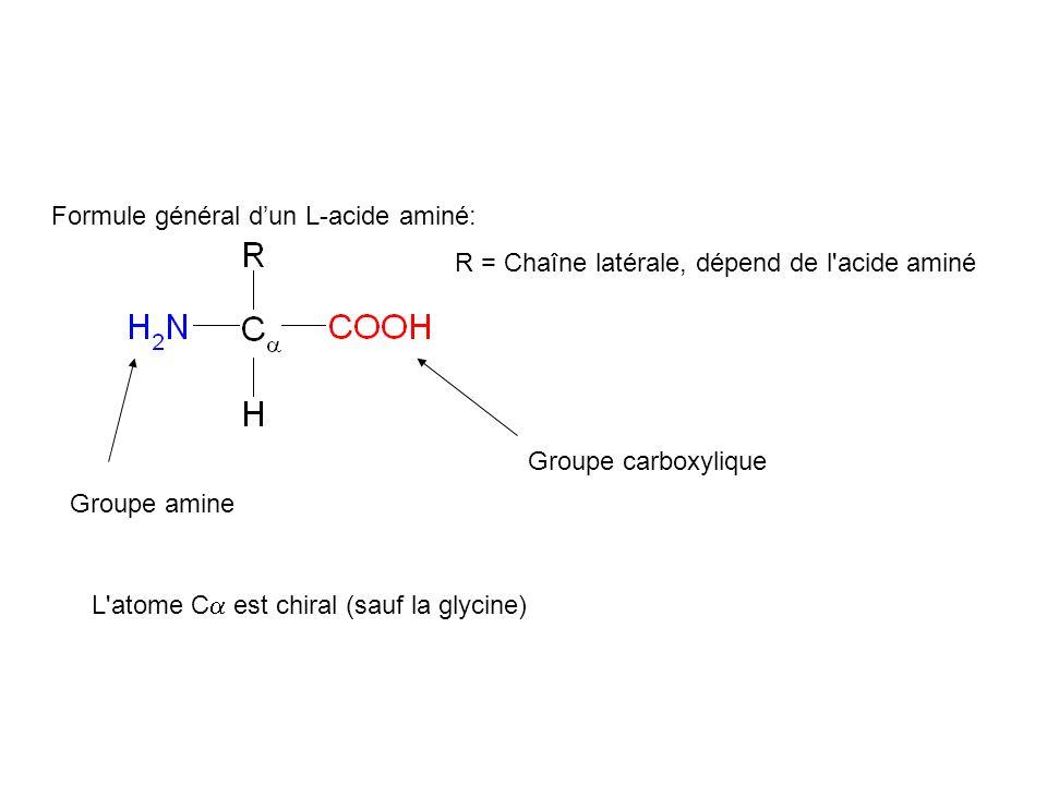 Formule général dun L-acide aminé: R = Chaîne latérale, dépend de l'acide aminé L'atome C est chiral (sauf la glycine) Groupe amine Groupe carboxyliqu