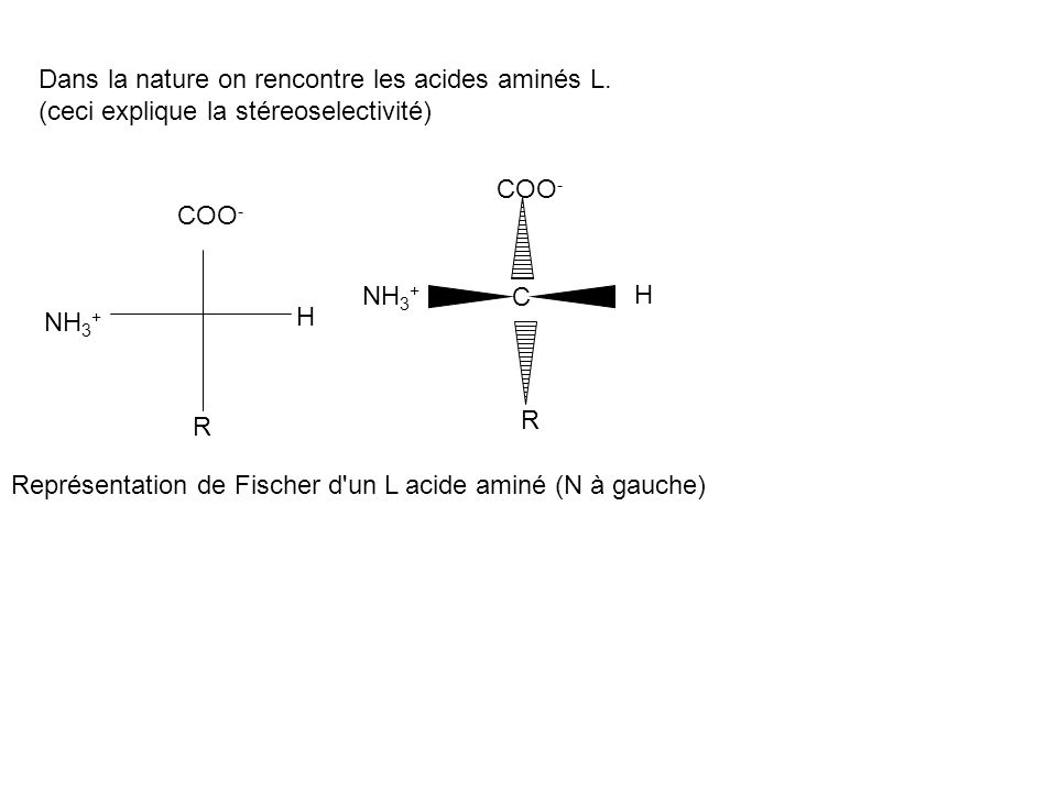 Dans la nature on rencontre les acides aminés L. (ceci explique la stéreoselectivité) COO - H NH 3 + R COO - H NH 3 + R C Représentation de Fischer d'