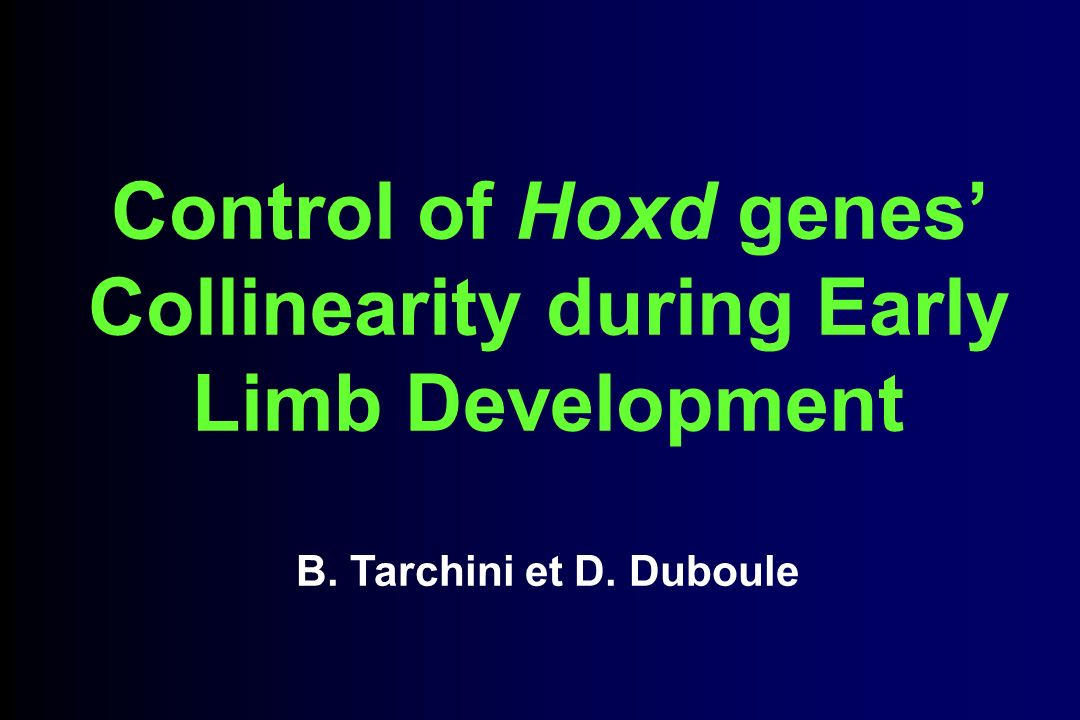 Control of Hoxd genes Collinearity during Early Limb Development B. Tarchini et D. Duboule