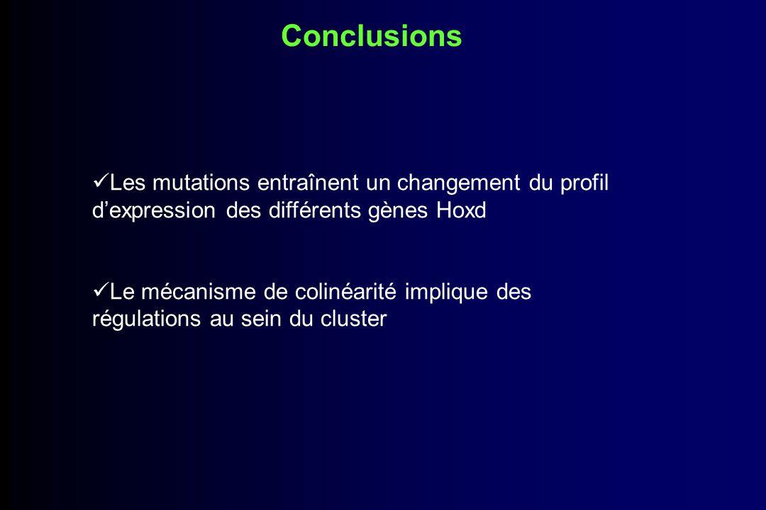 Discussion 2 vagues dactivation : une qui donnera le domaine zeugopode et qui dépend de 2 mécanismes opposés une qui donnera le domaine des doigts et régulée par GCR Les éléments régulateurs sont situés à lextérieur du cluster 2 origines potentielles pour ces régulateurs