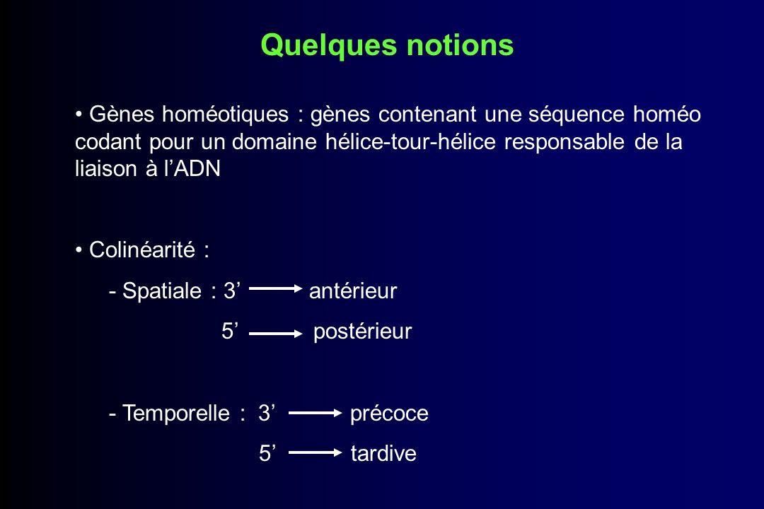 Combinatoire génique