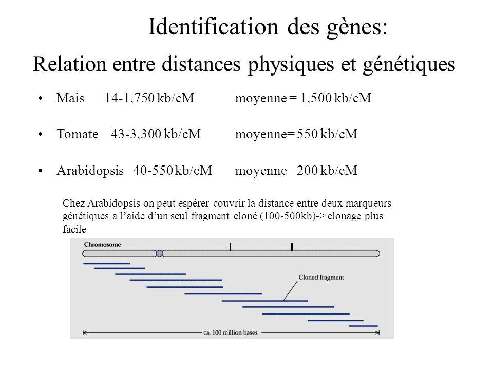 Relation entre distances physiques et génétiques Mais 14-1,750 kb/cMmoyenne = 1,500 kb/cM Tomate 43-3,300 kb/cMmoyenne= 550 kb/cM Arabidopsis 40-550 k