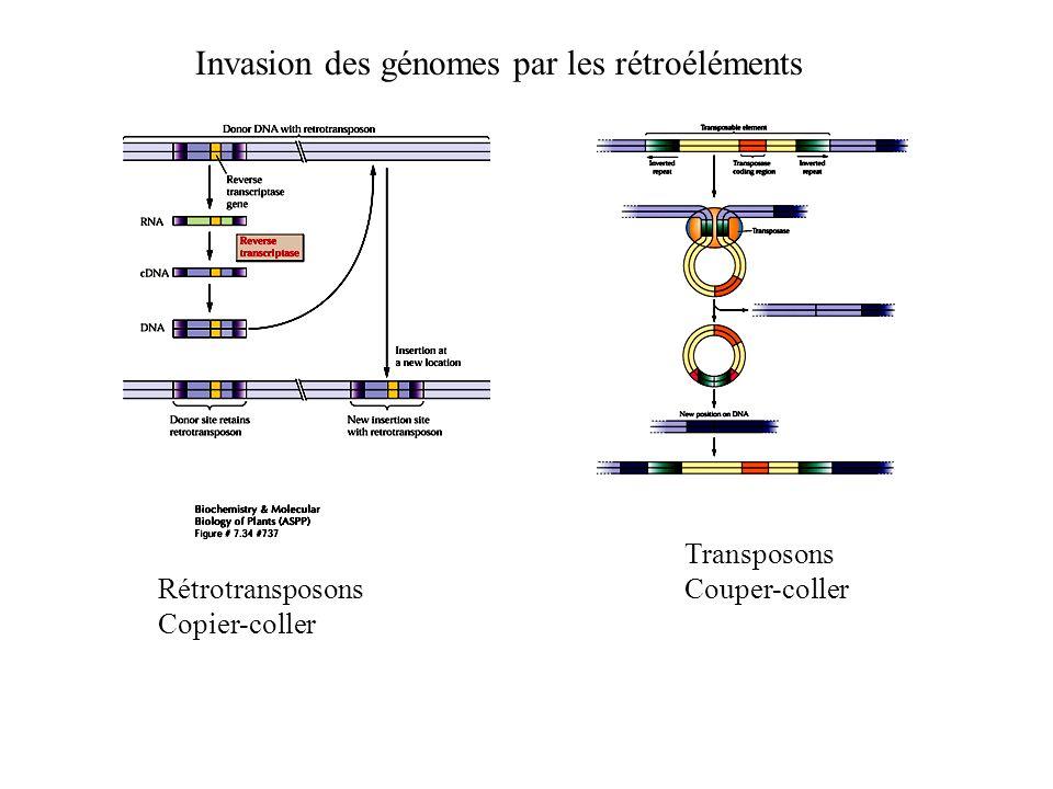 Transposons Couper-coller Rétrotransposons Copier-coller Invasion des génomes par les rétroéléments