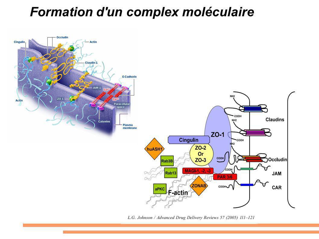 Formation d'un complex moléculaire