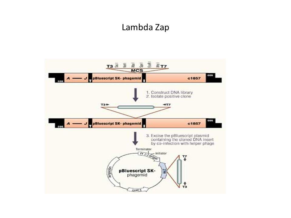 Lambda Zap