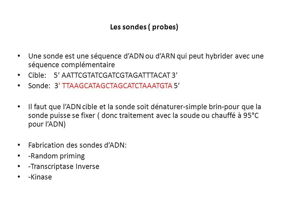 Les sondes ( probes) Une sonde est une séquence dADN ou dARN qui peut hybrider avec une séquence complémentaire Cible: 5 AATTCGTATCGATCGTAGATTTACAT 3