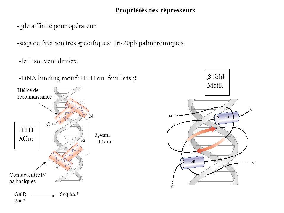 -gde affinité pour opérateur -seqs de fixation très spécifiques: 16-20pb palindromiques Propriétés des répresseurs -le + souvent dimère -DNA binding m