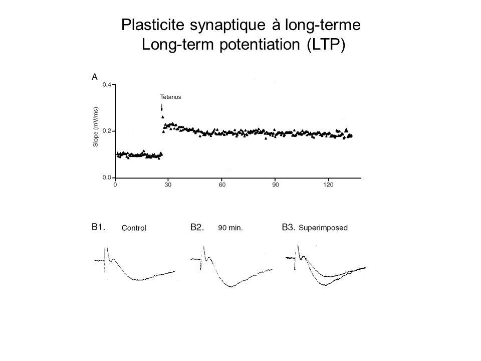 Plasticite synaptique à long-terme Long-term potentiation (LTP)
