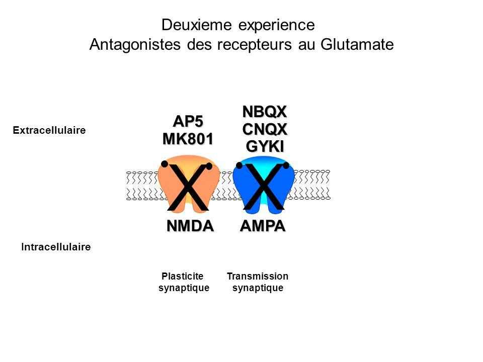 Deuxieme experience Antagonistes des recepteurs au Glutamate Plasticite synaptique Transmission synaptique Intracellulaire Extracellulaire AP5MK801 NB