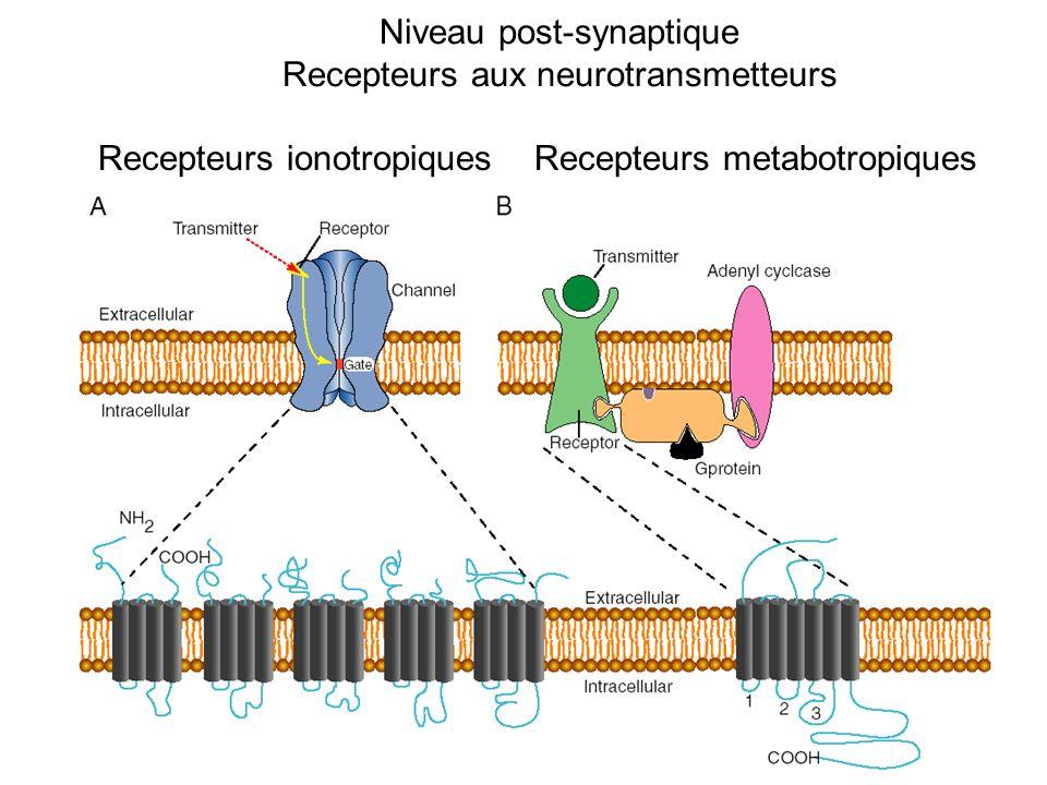 Niveau post-synaptique Recepteurs aux neurotransmetteurs Recepteurs ionotropiquesRecepteurs metabotropiques