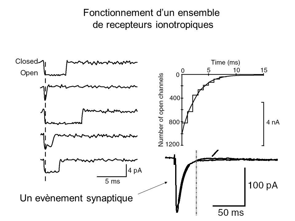 Fonctionnement dun ensemble de recepteurs ionotropiques Un evènement synaptique