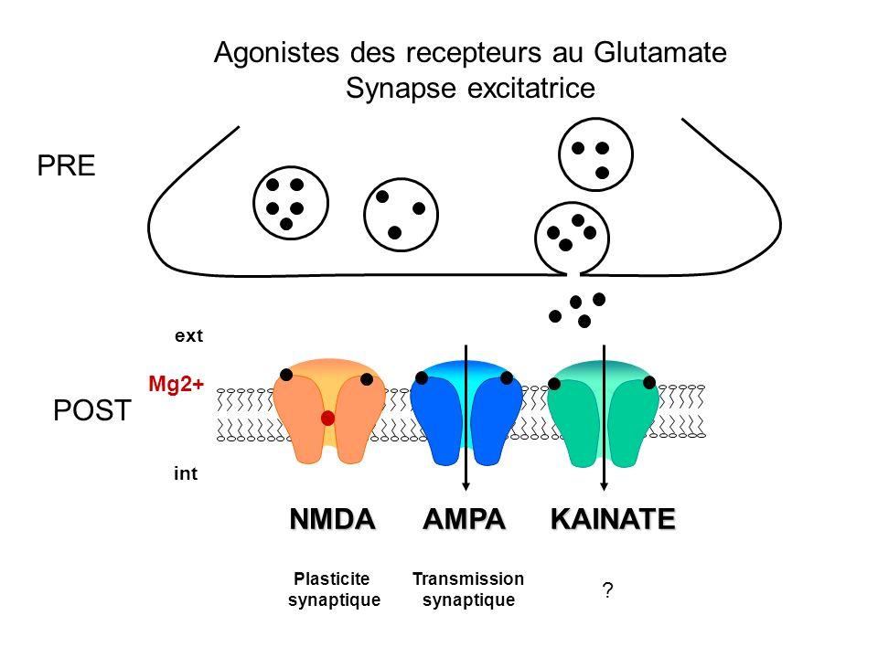 Agonistes des recepteurs au Glutamate Synapse excitatrice Plasticite synaptique Transmission synaptique ? int ext KAINATENMDAAMPA PRE POST Mg2+