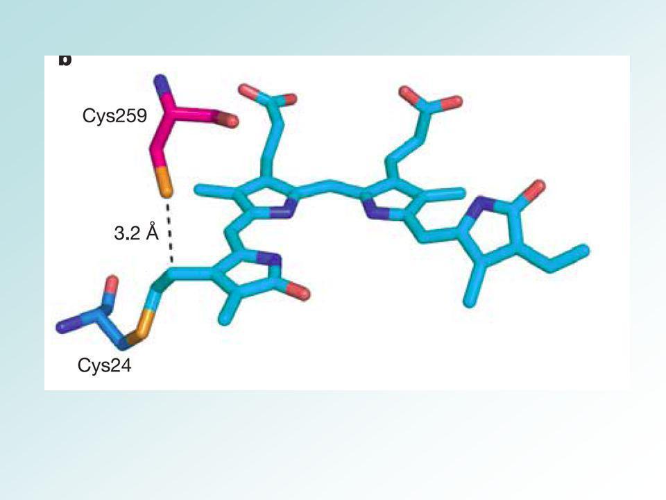 Photosynthèse CO 2 sels minéraux H2OH2O 1/2 O 2 [CH 2 O] 2 H 2 O + énergie lumineuse2 [H 2 ] + O 2 2 [H 2 ] + CO 2 [CH 2 O] + H 2 O 2 H 2 O + CO 2 O 2 + H 2 O + [CH 2 O] h