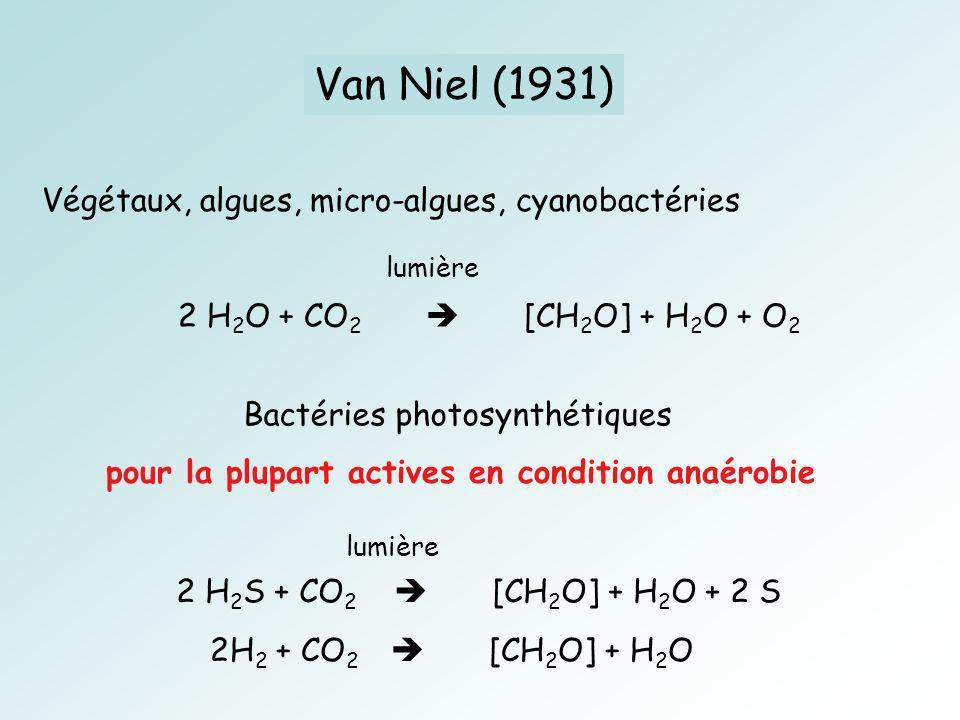 Van Niel (1931) Végétaux, algues, micro-algues, cyanobactéries 2 H 2 O + CO 2 [CH 2 O] + H 2 O + O 2 lumière Bactéries photosynthétiques 2 H 2 S + CO 2 [CH 2 O] + H 2 O + 2 S 2H 2 + CO 2 [CH 2 O] + H 2 O lumière pour la plupart actives en condition anaérobie