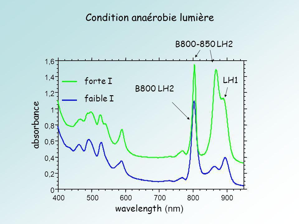 Condition anaérobie lumière B800-850 LH2 forte I faible I LH1 B800 LH2