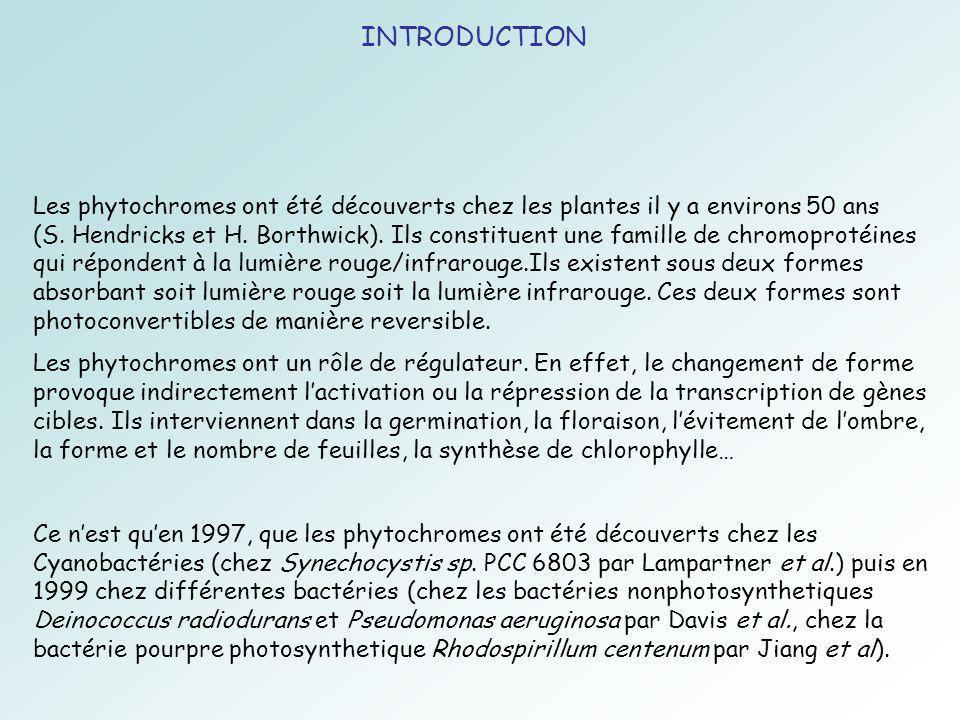 INTRODUCTION Les phytochromes ont été découverts chez les plantes il y a environs 50 ans (S.
