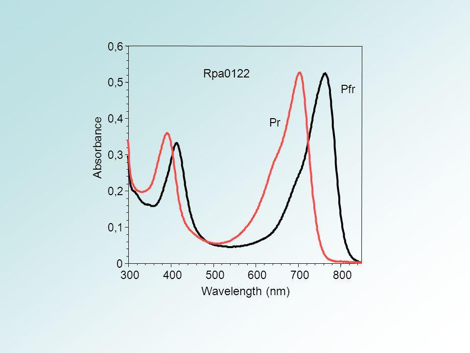 0 0,1 0,2 0,3 0,4 0,5 0,6 300400500600700800 Absorbance Wavelength (nm) Rpa0122 Pfr Pr