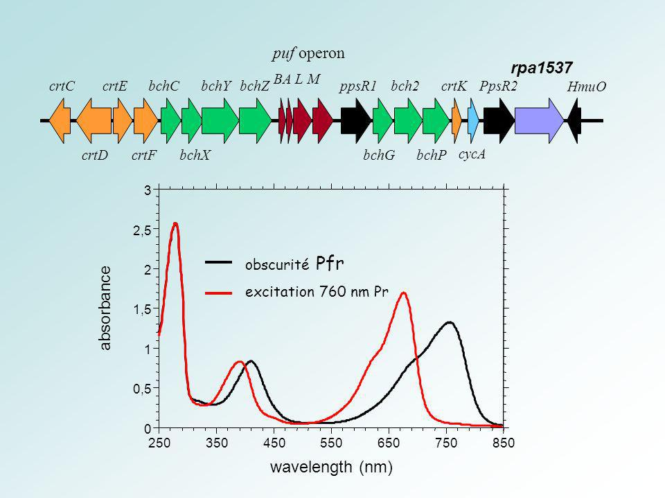 HmuO PpsR2 cycA bchC bchX bchYbchZ bchG bch2 bchP ppsR1crtKcrtC crtD crtE crtF puf operon BA L M rpa1537 excitation 760 nm Pr