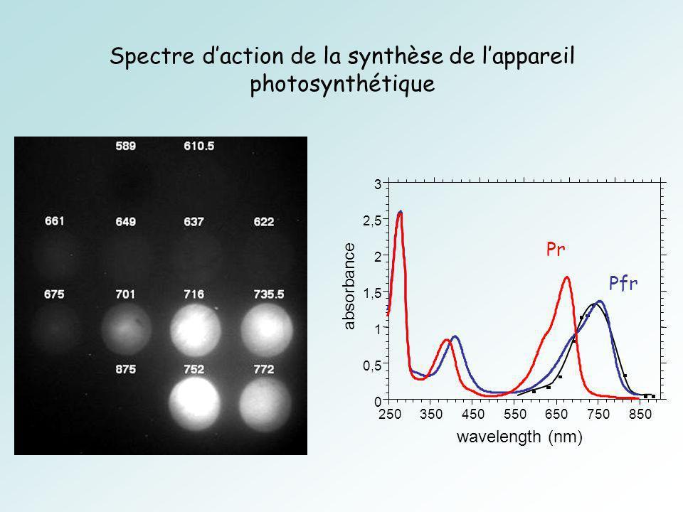 Spectre daction de la synthèse de lappareil photosynthétique
