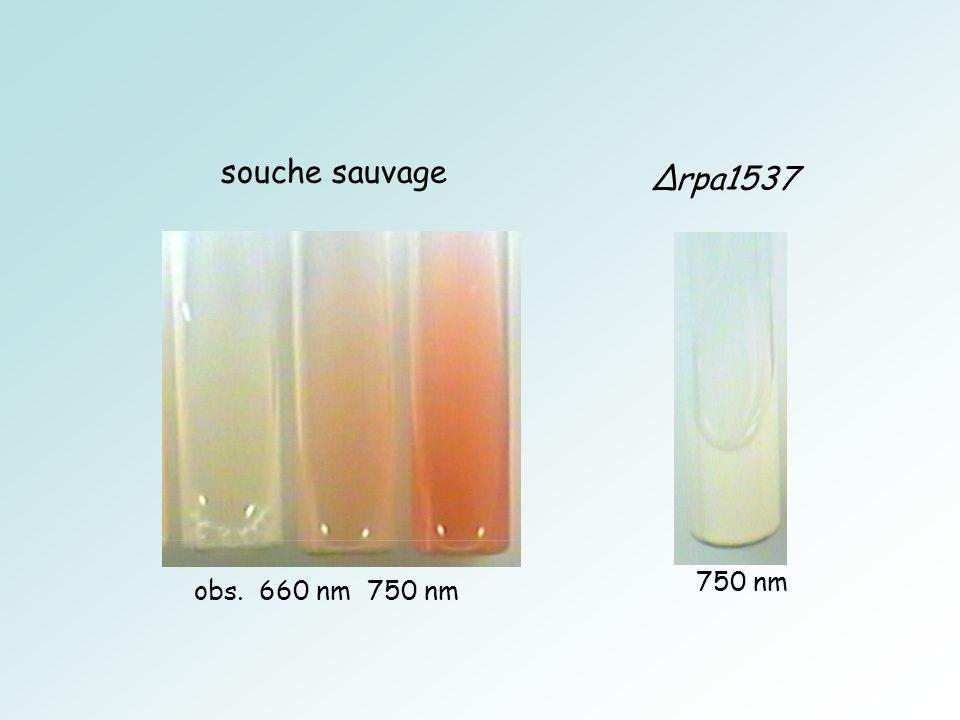 souche sauvage obs. 660 nm 750 nm rpa1537 750 nm