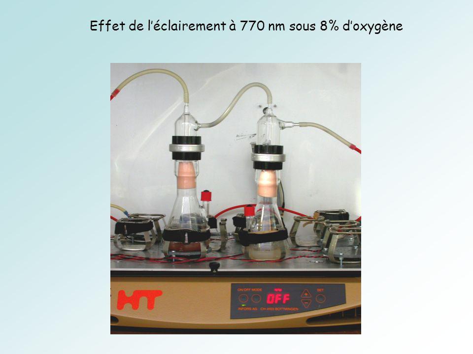 Effet de léclairement à 770 nm sous 8% doxygène