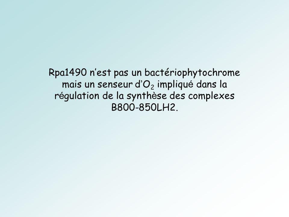 Rpa1490 nest pas un bactériophytochrome mais un senseur d O 2 impliqu é dans la r é gulation de la synth è se des complexes B800-850LH2.