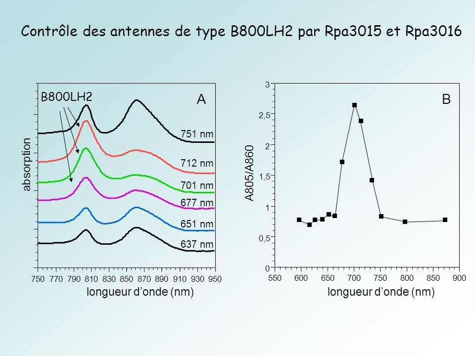 0 0,5 1 1,5 2 2,5 3 550600650700750800850900 A805/A860 longueur donde (nm) B 750770790810830850870890910930950 absorption longueur donde (nm) 751 nm 712 nm 701 nm 677 nm 637 nm 651 nm A B800LH2 Contrôle des antennes de type B800LH2 par Rpa3015 et Rpa3016
