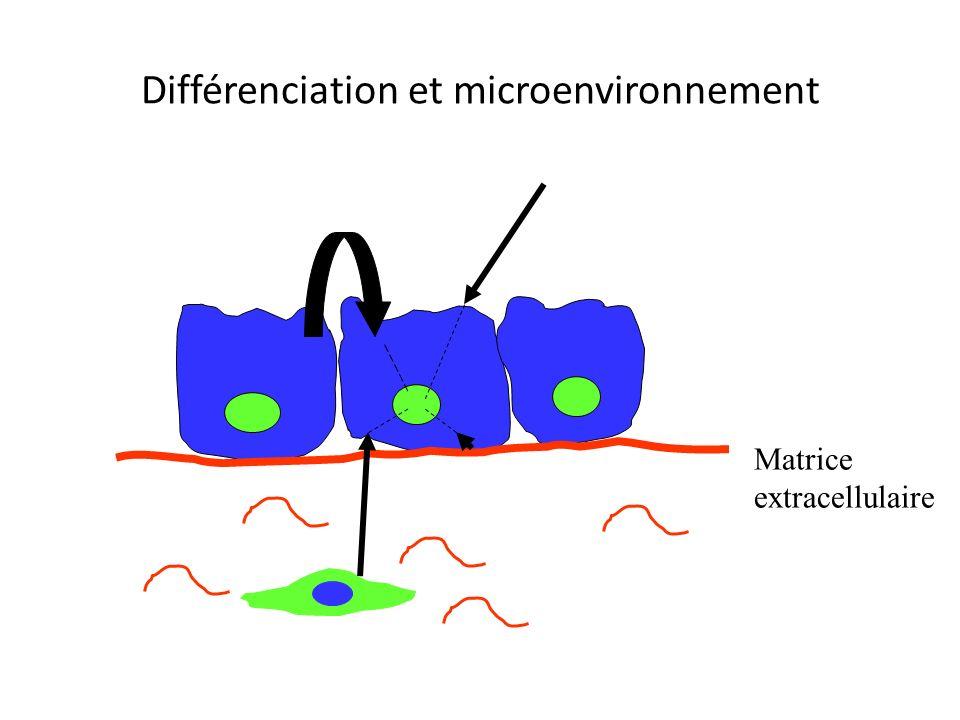 Devenir d'une cellule souche Auto-renouvellement Cellule souche Spécification ( absorption ou secretion?) Tris (rester dans les cryptes ou migrer?) Di