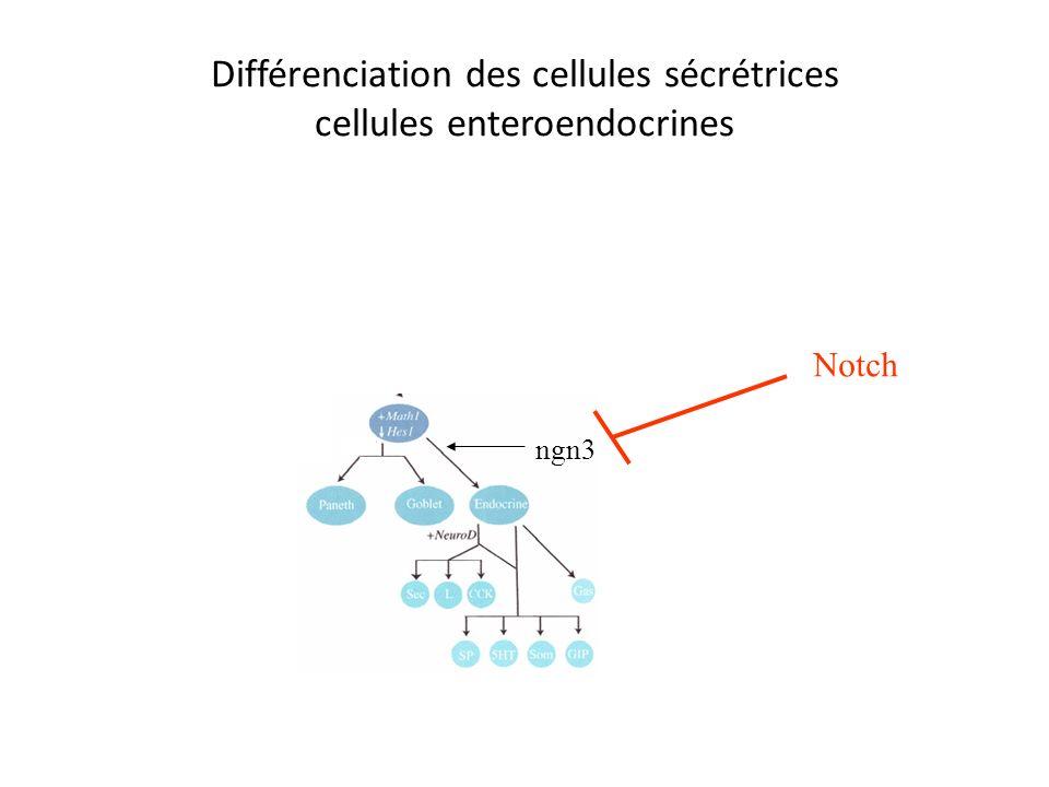 Différenciation des entérocytes rôle des isoformes de laminine Ln 5 et 10 Ln 1 (induction de la différenciation) Via linduction de genes homeotiques C