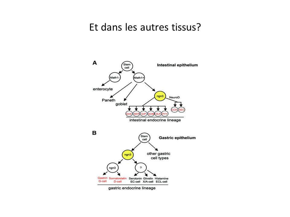 Et dans les autres tissus? La situation est aussi complexe que dans lintestin. Différentes séquences (spécification, tris parfois, différenciation,…)