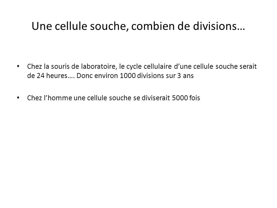 Combien de cellules souches par crypte? Environ 250 cellules dans les cryptes Sans doute entre 4 et 6 cellules souches par crypte Chez la souris: 7.5x