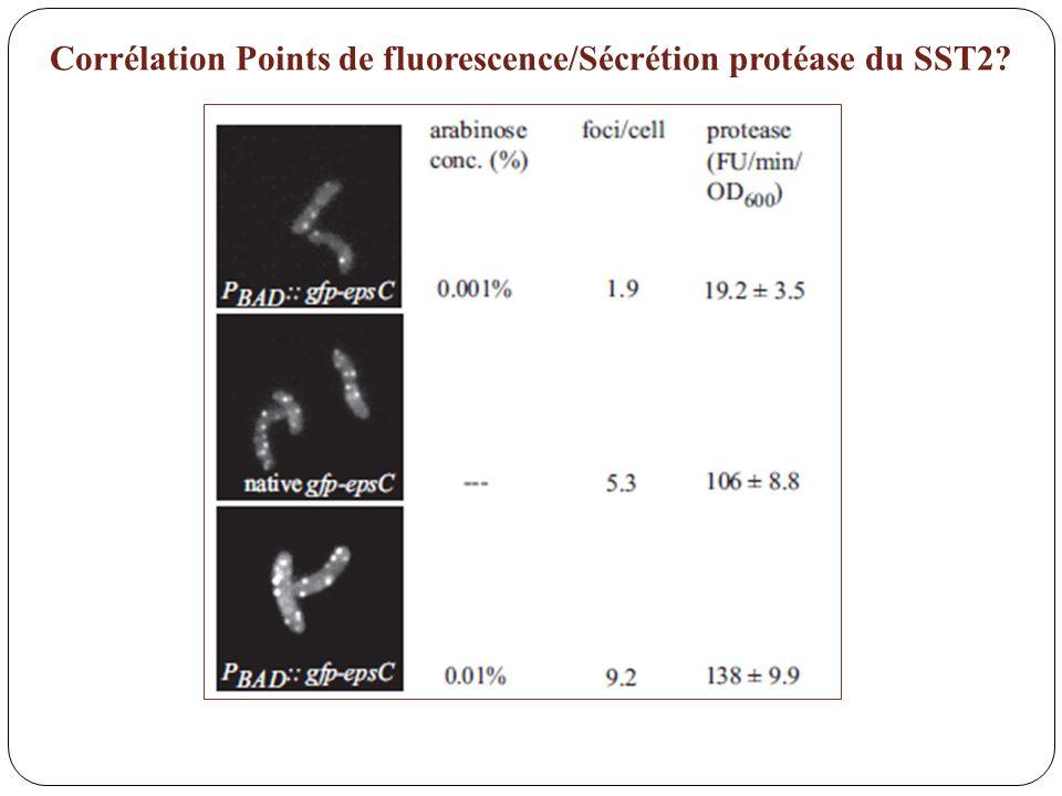 Corrélation Points de fluorescence/Sécrétion protéase du SST2?