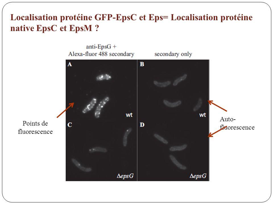 Auto- fluorescence Points de fluorescence