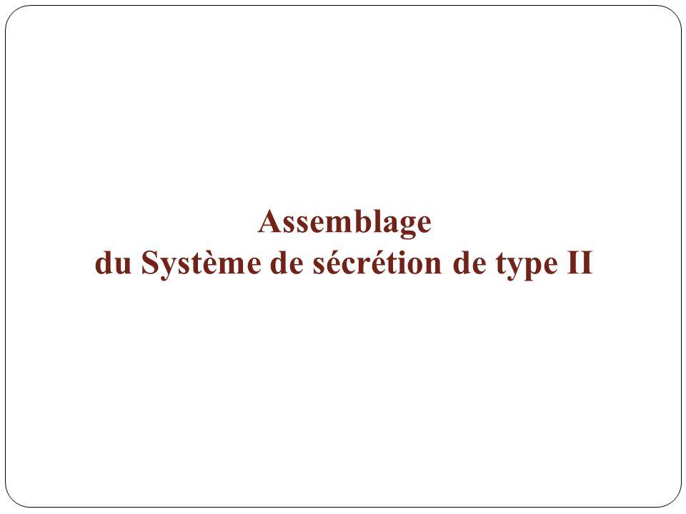 Assemblage du Système de sécrétion de type II