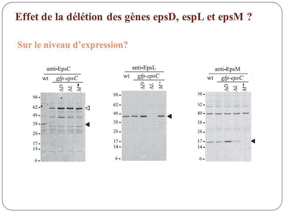 Effet de la délétion des gènes epsD, espL et epsM ? Sur le niveau dexpression?