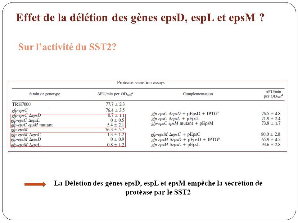 Effet de la délétion des gènes epsD, espL et epsM ? Sur lactivité du SST2? La Délétion des gènes epsD, espL et epsM empêche la sécrétion de protéase p