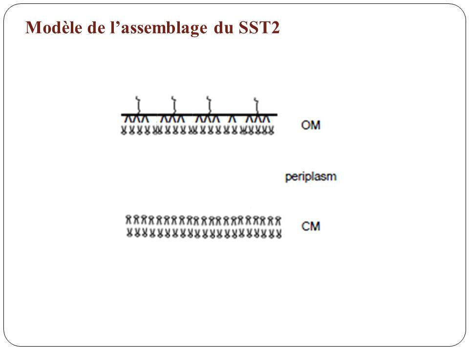 Modèle de lassemblage du SST2