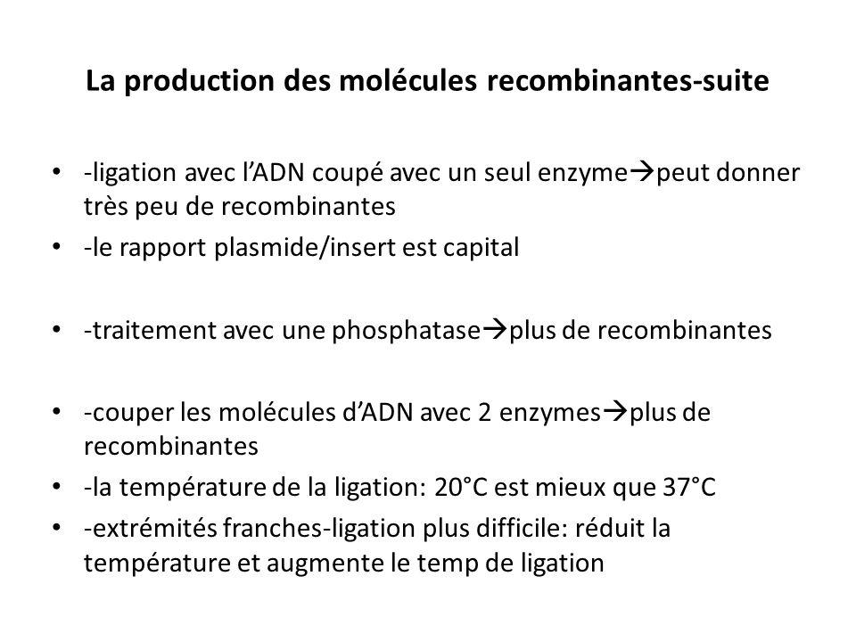 La production des molécules recombinantes-suite -ligation avec lADN coupé avec un seul enzyme peut donner très peu de recombinantes -le rapport plasmi