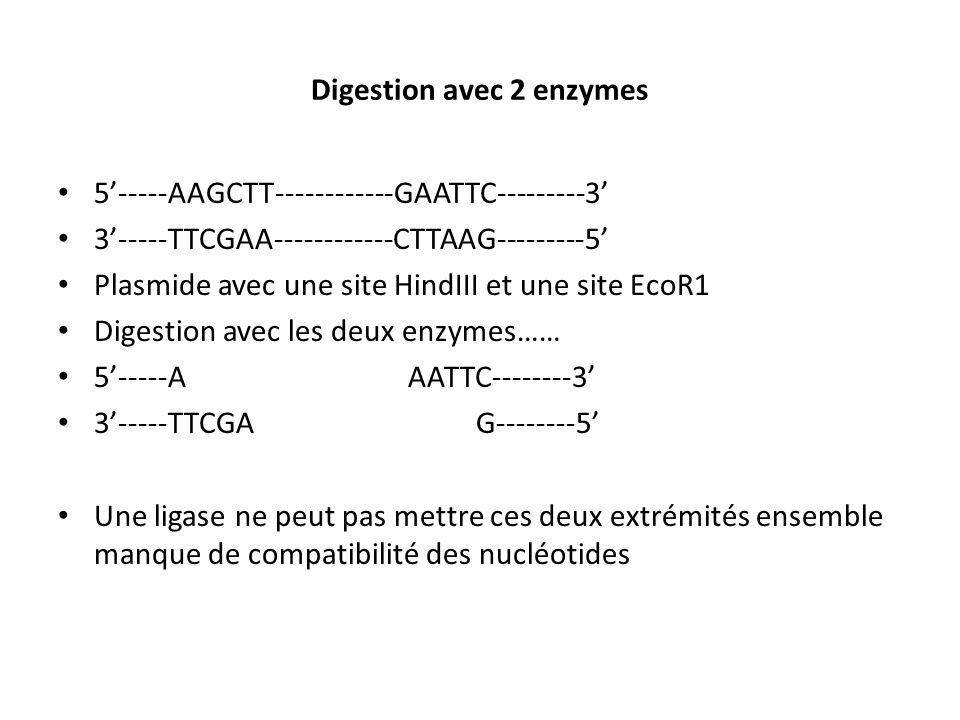 Digestion avec 2 enzymes 5-----AAGCTT------------GAATTC---------3 3-----TTCGAA------------CTTAAG---------5 Plasmide avec une site HindIII et une site