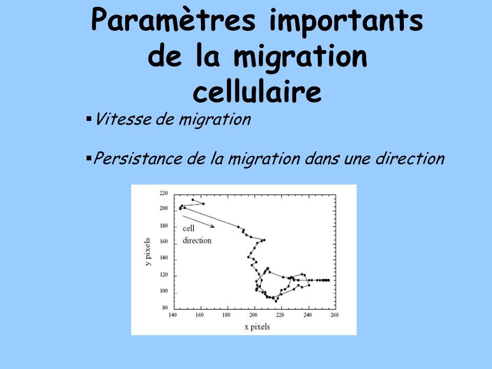 Paramètres importants de la migration cellulaire Vitesse de migration Persistance de la migration dans une direction