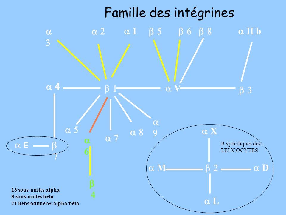 V L D 4 E b 1 M X R spécifiques des LEUCOCYTES Famille des intégrines 16 sous-unites alpha 8 sous-unites beta 21 heterodimeres alpha/beta