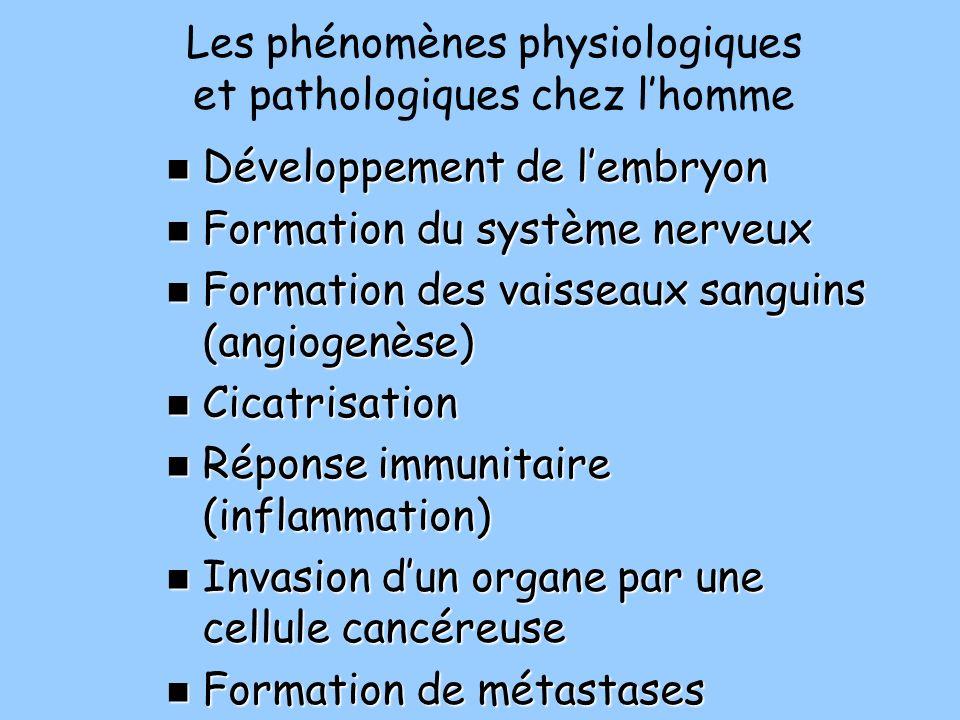 Les phénomènes physiologiques et pathologiques chez lhomme Développement de lembryon Développement de lembryon Formation du système nerveux Formation